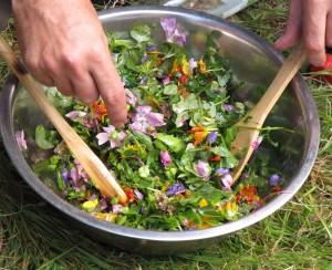 prépartion-salade-sauvage