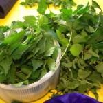L'ortie : l'une des bases les plus abondantes, savoureuses et nutritives des sauvages comestibles.