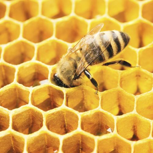 connected by nature introduction l apiculture. Black Bedroom Furniture Sets. Home Design Ideas