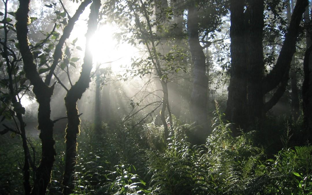Connected by Nature » Le Shinrin-yoku : les bienfaits d'un